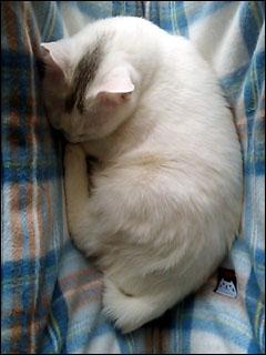 Cat_igor_1