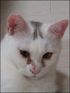 Cat_igor_3