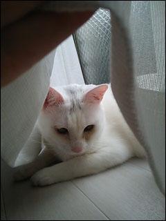 Cat_igor_4