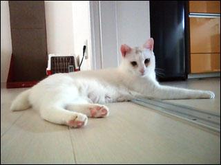 Cat_igor_7