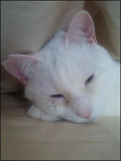 Cat_igor_11
