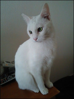 Cat_igor_12