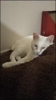 Cat_igor_14