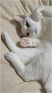 Cat_igor_15