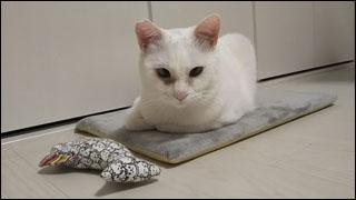 Cat_igor_17