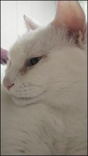 Cat_igor_20