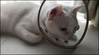 Cat_igor_21