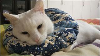 Cat_igor_22
